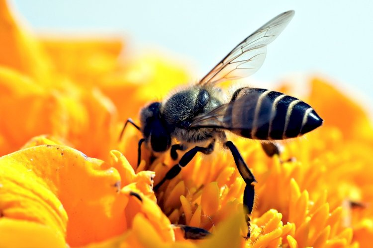 What's Happening to the Bees? Are honey bees jeopardized?